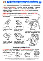 Science - Fourth Grade - Activity Lesson: Vertebrates - Animals with Backbones